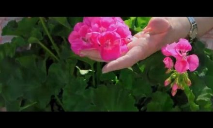 Nutrindo de Amor a Própria Alma – Versão em Vídeo.