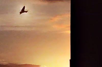 O Céu vê… (banner 1)