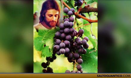 Culto do Evangelho com o Espírito Matheus-Anacleto. A videira e os ramos (João, 15:1-8).