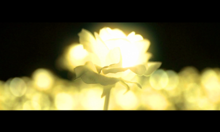 Quando há amor (videomensagem)